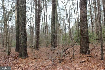 2104 BUCCANEER BOULEVARD, GREENBACKVILLE, VA 23356, ,Land,For Sale,BUCCANEER,1001561462